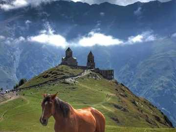 Gruziński koń. - Układanka: koń w Gruzji.