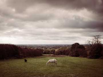 Konie w polu - biały koń jedzący trawę.