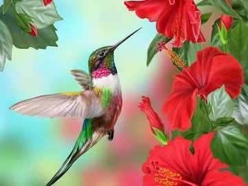 Hummingbird ... - Hummingbird .......................