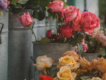 Rose ... - Rose ........................