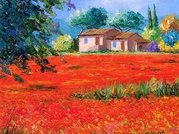 Coquelicots - Champs de fleurs en Provence