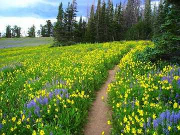 Sommerwiese. - Puzzle: Blumen auf der Sommerwiese.