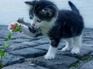 kot Ewy - Miły - Kotek z kwiatkiem ładnie się bawi