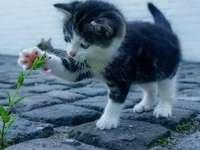 Ewas Katze - Schön - Kätzchen mit einer Blume spielt gut
