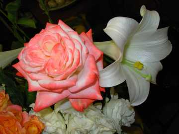 Rose and Lily - Rose and lily of St. Joseph
