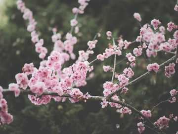"pink blossom trees - Without hesitation my favorite japanese concept is ""mono no aware"", which we could translate for"