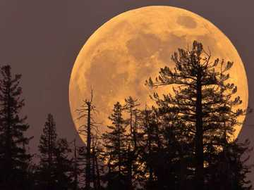 Super Blood Moon - Super blood moon ...........