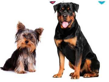 Zwierzęta domowe - zwierzęta - zwierzęta domowe - jesteśmy bohaterami 1. jednostka 1