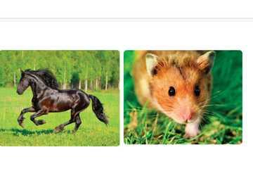 zwierzęta - zwierzęta domowe - zwierzęta - zwierzęta domowe - jesteśmy bohaterami 1- jednostka 1
