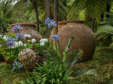 Ogródeczek - zielony ogród i stare ogromne donice