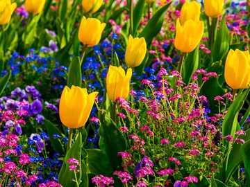 Tulipany Szwajcarii - Tulipany Szwajcarii =)