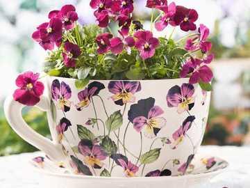 violets in a bowl - violets in a bowl with violets