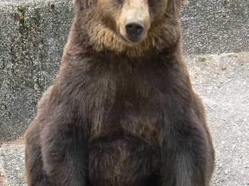 ZOO - Warschau - Braunbär aus dem Warschauer Zoo