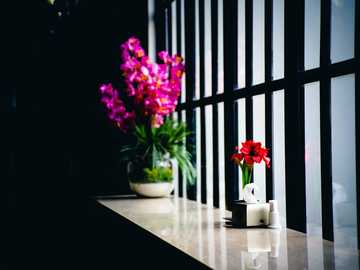 Alienated - two flowers on pots near window. Bandung, Indonesia