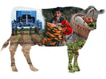 LANDWIRTSCHAFTLICHE PRODUKTION - Ein Rätsel für Kinder über die landwirtschaftliche Produktion.