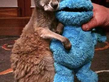 Sleepy Kangaroo baby - Sleepy Kangaroo baby