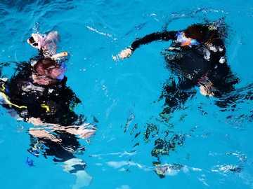 dwie osoby w zbiorniku wodnym - Divers Down Under! Nurkowie zanurzają się. Nurek po lewej dostosowuje swoją pływalność podcza