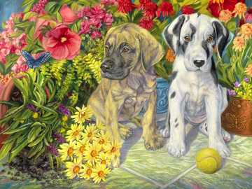 Two little dogs. - Puzzle: little dogs two.