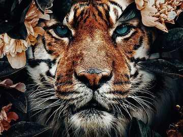 Tygrysek ... - Tygrysek ....................