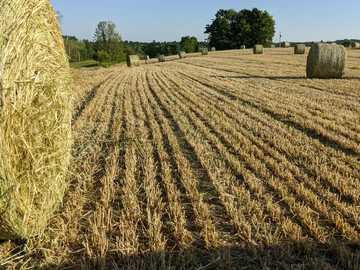 campo di erba marrone durante il giorno - Balle rotonde in una fattoria in un campo.