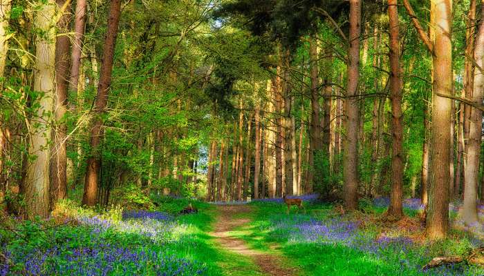 W Lesie Z Kwiatkami I Sarenką - W Lesie Z Kwiatkami I Sarenką.