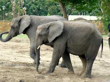 Warschau - ZOO - Elefanten - ein Spaziergang mit einem Freund.
