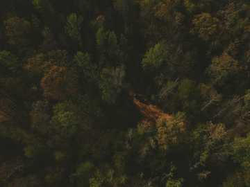 aerial view of green tall trees - Jeepin in the remote wilderness of the Ozark mountains.