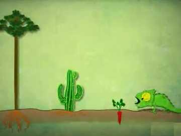 CHAMELEON SEES 3 FLOORS - Chameleon sees 3 different plants and learns what their roots, stems and leaves are.