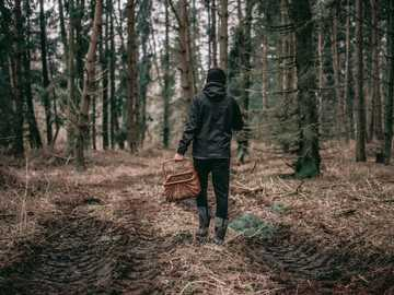 durch den Wald gehen - Person im schwarzen Kapuzenpulli, der Korb im Wald während des Tages hält. Burkat, Polen
