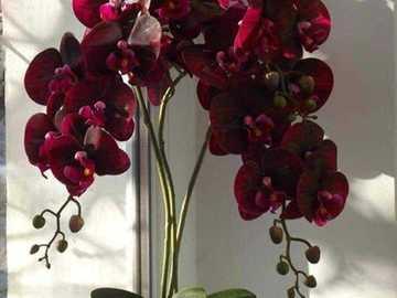 Orchidea Borgogna. - Puzzle: Borgogna Orchidea.