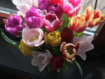 Wiosna kwiaty - Wiosenne kwiaty tulipany kolorowe