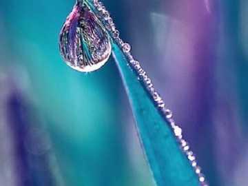 Dew drop - Dew Drop ...............
