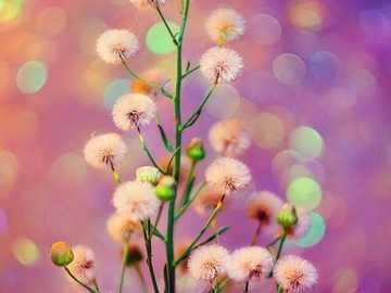Flower ... - Flower ...................