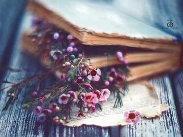 Książka ... - Książka .......................
