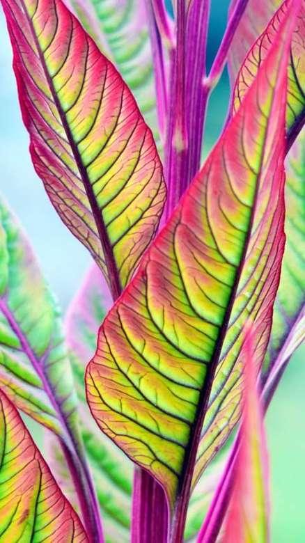 Blätter ... - Blätter ....................