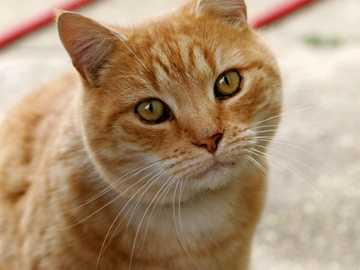 Układanka dla kotów - Rozwiąż zagadkę kota domowego