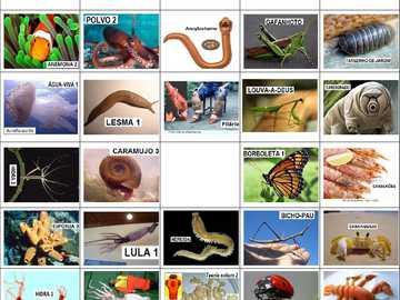 INVERTEBRADOS - Quebra-cabeça dos animais invertebrados para você se divertir!