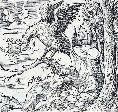 Orel si vyhlíží svojí oběť (14×13)