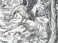 Orel si vyhlíží svojí oběť