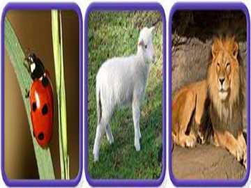 l est pour lion d'agneau coccinelle - lmnop qrstuvwxyz lmnop