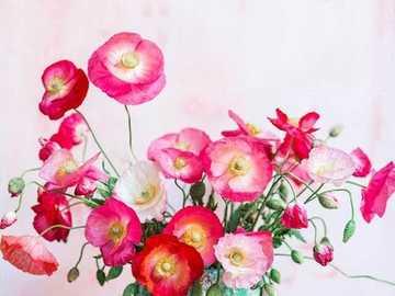 Bouquet ... - Bouquet .....................