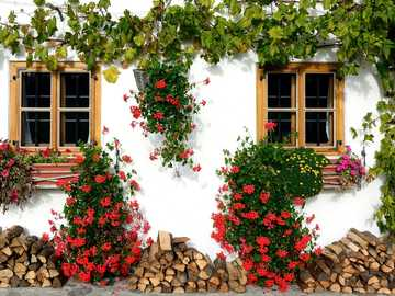 The house is covered with ivy - green ivy and red flowers