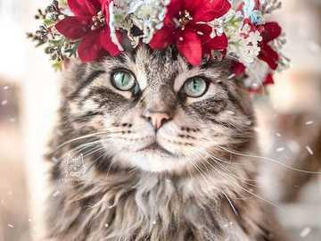 Kitty ... - Kitty ................................................. .......