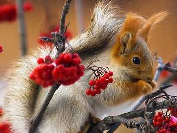 Squirrel .... - Squirrel ........................