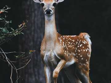 Bambi ... - Bambi ....................
