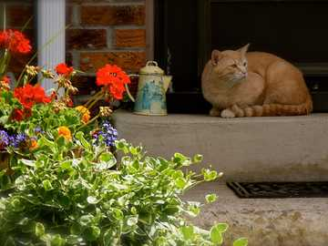 A cat guarding the house - time passing lazily ----
