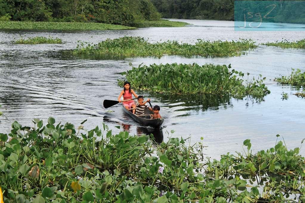 Plemię Warao - czysta woda i urządzenia sanitarne - Obraz przedstawiający życie w wodzie plemienia Warao - Water Inhabitants