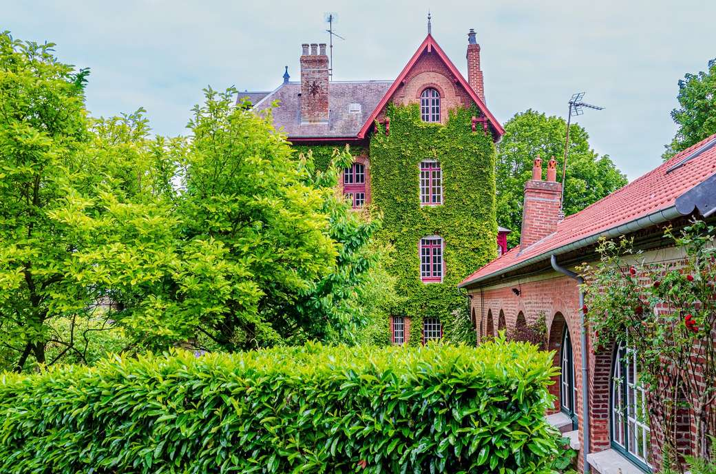 Architecture - houses covered with ivy