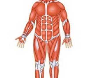 Con el sistema muscular puedo mover mi cuerpo - El sistema muscular está compuesto por formaciones blandas y elásticas que nos permiten realizar m