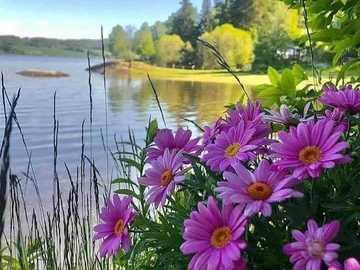 dal fiume - fiori sul fiume - paesaggio
